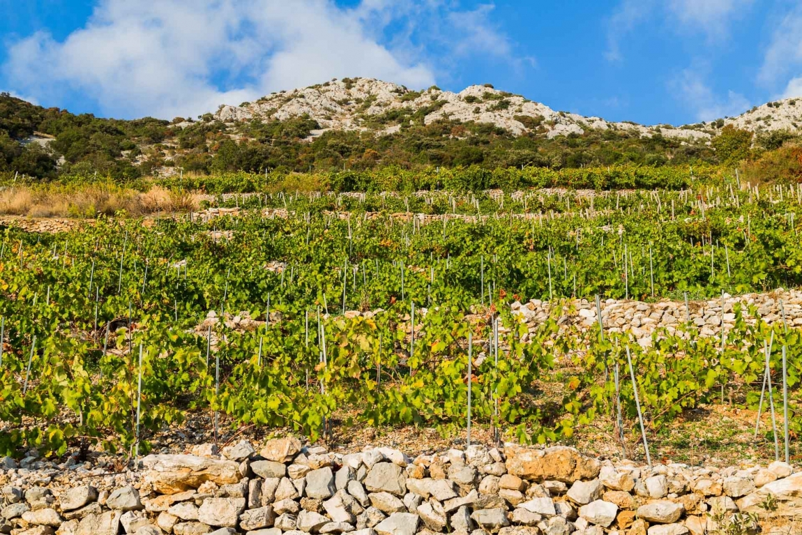 trstenik vineyard croatia holidays